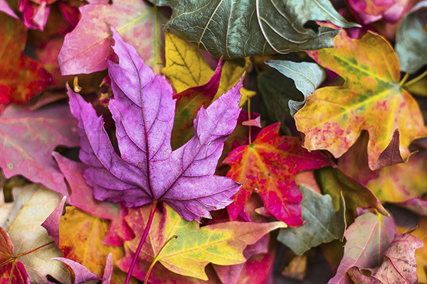 Eventi per un autunno perfetto in centro storico