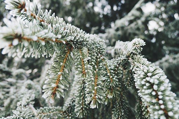 Le giuste attività per scoprire l'inverno nostrano