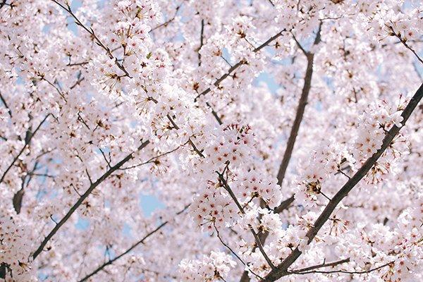 Idee per una primavera nel Volterrano